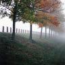Fog Oct 2007